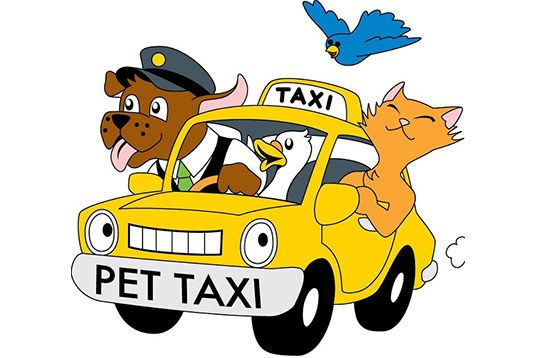 Animal Transport - Pet Friendly