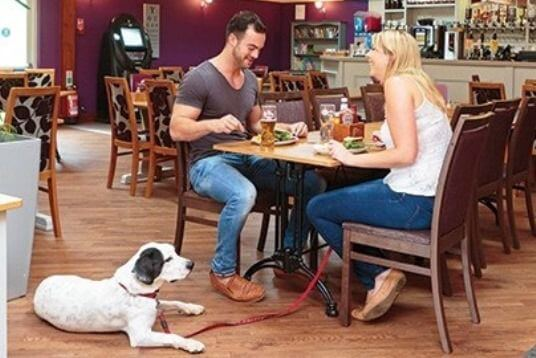 Pet Friendly Dining - Pet Friendly