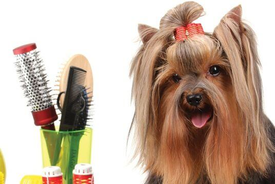 Pet Grooming Washing - Pet Friendly