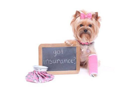 Pet Insurance - Pet Friendly